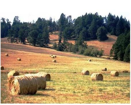 美国农村实拍图片_风景520